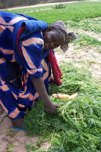 landbouwhandel - vrouwen laten hun inkomen groeien in senegal