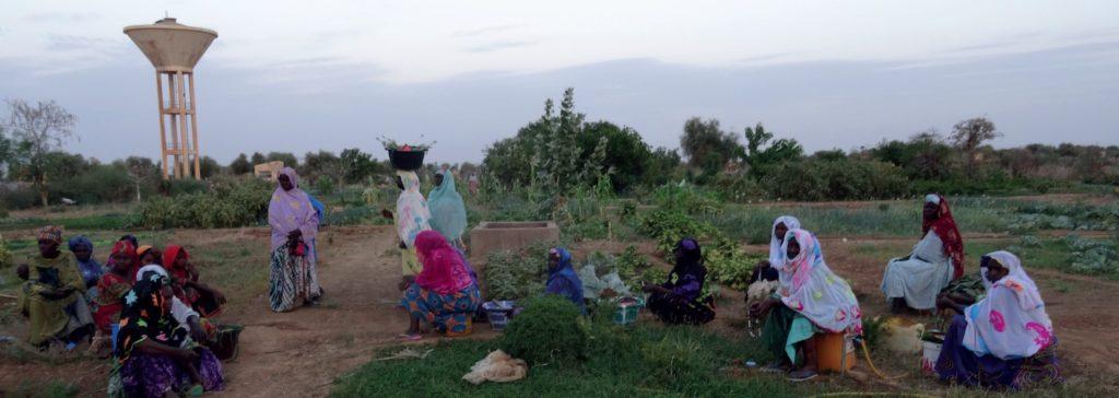 Futa-45 vrouwen - water- landbouw - gezond eten 03
